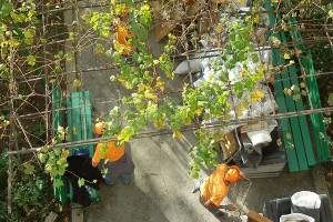 Почистване на мазета и тавани в Пловдив цени